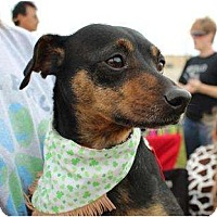 Adopt A Pet :: Bacon - Justin, TX