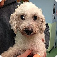 Adopt A Pet :: Snugz - New York, NY