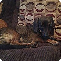 Adopt A Pet :: Max - Bardonia, NY