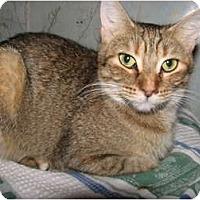 Adopt A Pet :: Josie - Oxford, NY