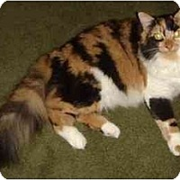 Adopt A Pet :: Dolly - Westfield, MA