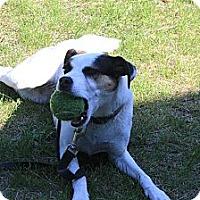 Adopt A Pet :: Zalie - Montreal, QC