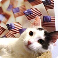 Adopt A Pet :: Louie - Albany, NY