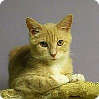 Adopt A Pet :: Ringo - Dover, OH