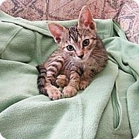 Adopt A Pet :: Nissa - Modesto, CA