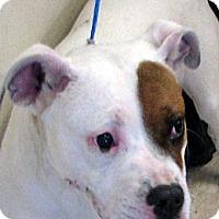 Adopt A Pet :: Gabby - Ludington, MI