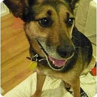Adopt A Pet :: Georgia - Alexandria, VA