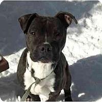 Adopt A Pet :: Herbie - Chicago, IL