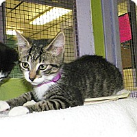 Adopt A Pet :: Willow - Dover, OH