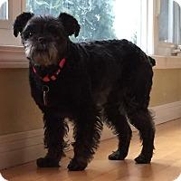 Adopt A Pet :: Gretel - Edmonton, AB