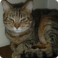Adopt A Pet :: Nataly - Hamburg, NY