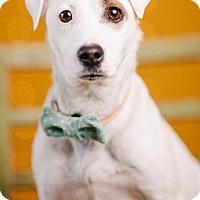 Adopt A Pet :: Charlie - Portland, OR