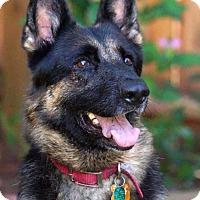 Adopt A Pet :: Morena - Wayland, MA