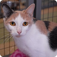 Adopt A Pet :: Cleo - Winchendon, MA