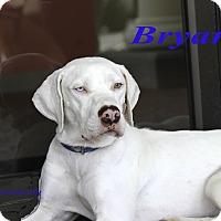 Adopt A Pet :: Brynne - Alpharetta, GA