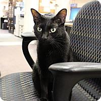 Adopt A Pet :: Sydney - Carlisle, PA