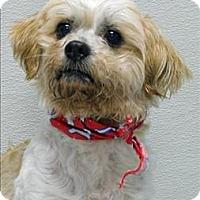 Adopt A Pet :: Bowser - Topeka, KS