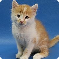 Adopt A Pet :: Henry - Overland Park, KS