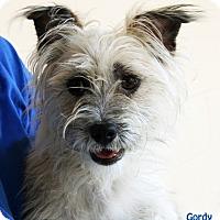 Adopt A Pet :: Gordy - Santa Maria, CA