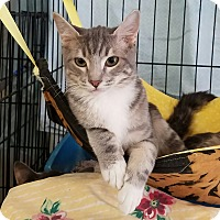 Adopt A Pet :: Grayson - Fallbrook, CA