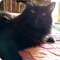 Adopt A Pet :: Aslan - Ypsilanti, MI