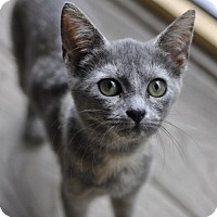 Adopt A Pet :: Flora - Liberty, NC