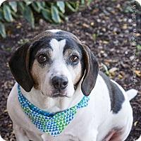 Beagle Mix Dog for adoption in Naperville, Illinois - Luke