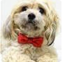 Adopt A Pet :: JIFFY (ECAS Kennel B2) - Pleasanton, CA