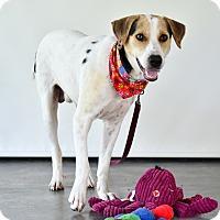 Adopt A Pet :: Bongo - Nanaimo, BC