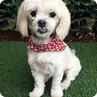 Adopt A Pet :: MISTY - Rancho Palos Verdes, CA