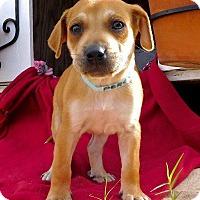 Adopt A Pet :: Percy - St. Francisville, LA
