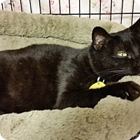 Adopt A Pet :: Momma - Diamond Springs, CA