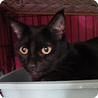 Adopt A Pet :: Nero - Jackson, MO