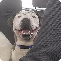 Adopt A Pet :: Calvin - San Francisco, CA