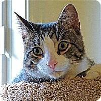 Adopt A Pet :: Tucker - Victor, NY