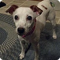 Adopt A Pet :: Sookie in Houston - Houston, TX