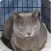 Adopt A Pet :: Simon - Westfield, MA