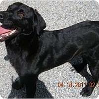 Adopt A Pet :: 1 URGENT Marley - Wakefield, RI