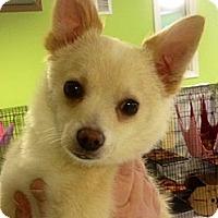 Adopt A Pet :: Cupid - Muskegon, MI