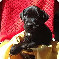Adopt A Pet :: Baby June - Marlton, NJ