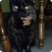 Adopt A Pet :: Calypso - Hamburg, NY