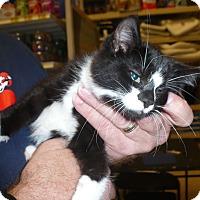 Adopt A Pet :: Sheldon - Colmar, PA
