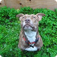 Adopt A Pet :: Layla, simply amazing - Sacramento, CA
