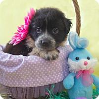 Adopt A Pet :: Marie - Baltimore, MD