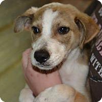 Adopt A Pet :: Dora - Tampa, FL