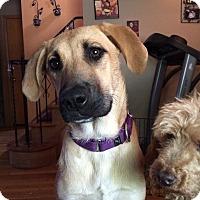 Adopt A Pet :: April - Cleveland, OH