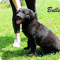 Adopt A Pet :: Bullett - Daleville, AL