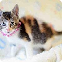 Adopt A Pet :: SKYLA - Houston, TX