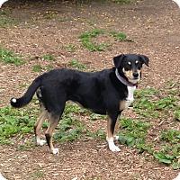 Adopt A Pet :: ROSA - Media, PA