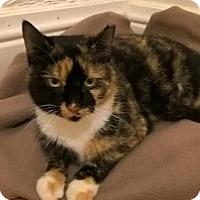 Adopt A Pet :: Sabrina - Delmont, PA